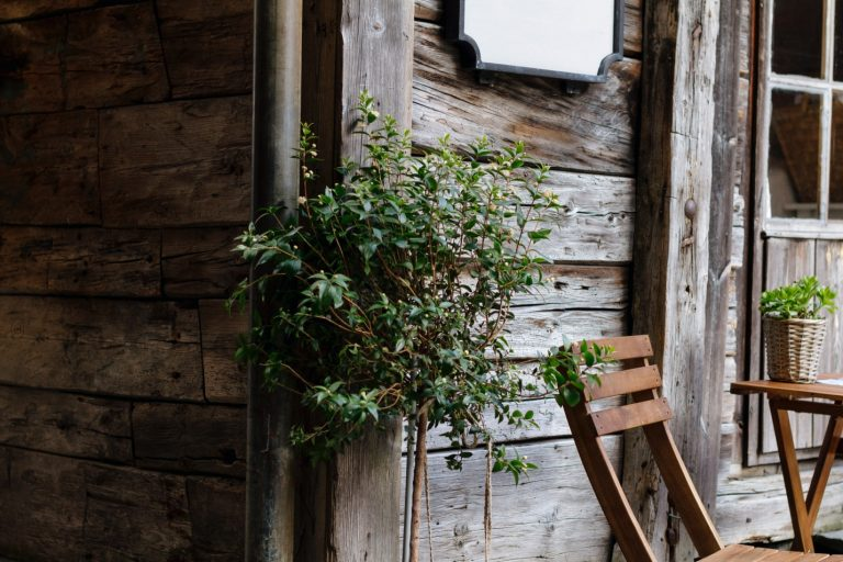 green leaf plant near brown wooden wall and armless chair